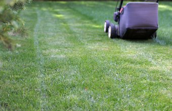 A lawn-mowing business is a good choice for people who like working outdoors.