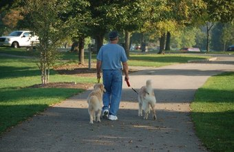 One way to make money as an entrepreneur is dog walking.