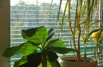 Plants add moisture to the air for a more comfortable environment.