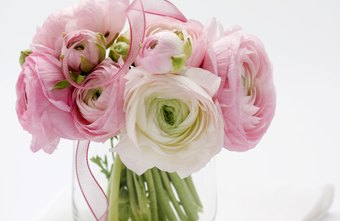 Please your customers with peonies in your floral boutique.