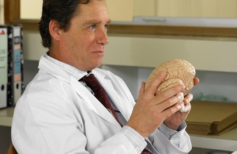 Neuropsychologists help patients with brain disorders and cognitive impairments.