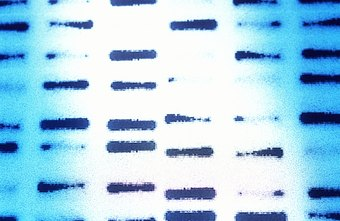 DNA codes give insight into inherited diseases.