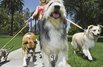 A pet store owner starting a dog-walking business is an example of diversification.