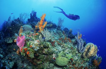 Aspiring marine biologists should learn to scuba dive.