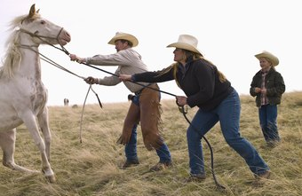 Ranch hand jobs in colorado