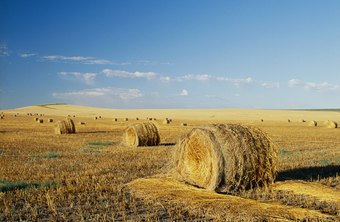 Hay field in North Dakota.