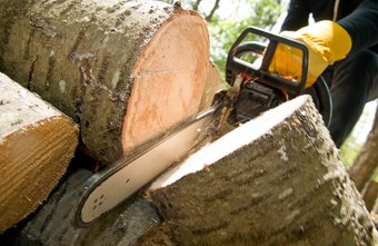 Some loggers operate machinery to cut trees.