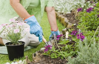 Plant care specialty ranges from planting flowers to large-scale garden design.