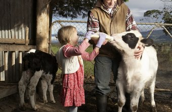 Farm kids often have daily responsibilities for animal care.