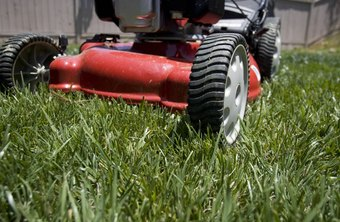 Build a business maintaining lawns in your area.
