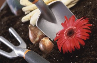 Use tools with large handles to reduce arthritic pain when you garden.