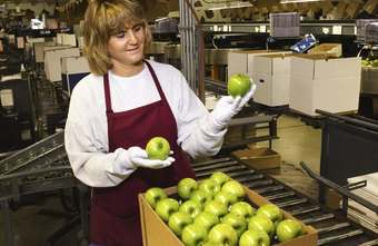 A food inspector examines apples at a processing plant.
