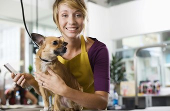 Pet grooming and boarding services are expected to net $4 billion in 2012.
