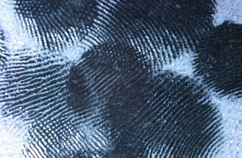 Fingerprints uniquely identify people, including criminal suspects.