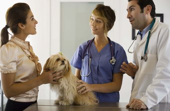 Veterinary techs discuss pet care with animal owners.