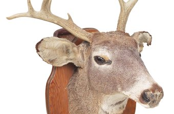 Most states require commercial taxidermists to be licensed.