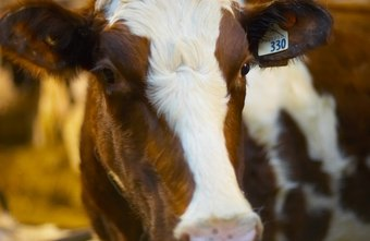 Milk products from cows unaffected by hormones and chemicals are gaining public appeal.