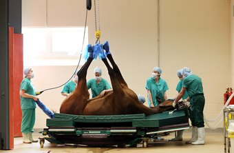 Among the large animals veterinarians treat are horses.
