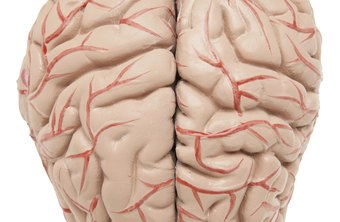 Strokes occur when a clot or a break in a blood vessel stops blood flow to the brain.