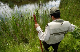 Field botanists might work with aquatic plants, or find assignments in an arid climate.