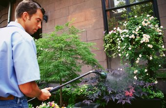 Landscaping companies often maintain greenery and gardens outside public facilities.