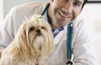 Veterinarians can earn six-figure salaries.