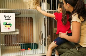 Many rescued animals are adopted through SPCA shelters.