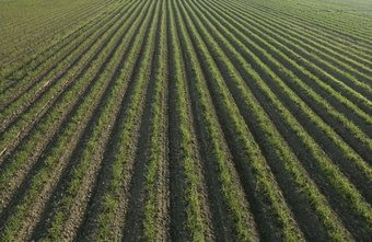 Soil scientists help increase and improve food production.