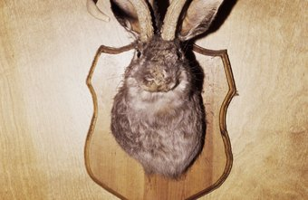 Taxidermists help hunters display their trophies.