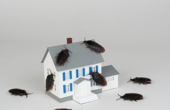 Convincing prospects to buy into your pest control franchise requires careful planning.