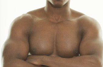 Two muscles make up the chest, called the pectoralis major and minor.