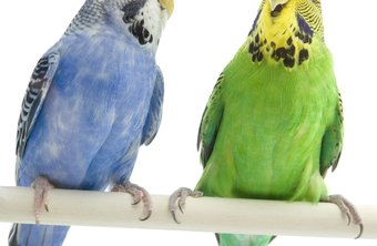 Most states require a license to sell exotic birds.