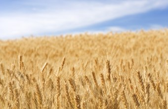 Derivatives can offset price increases in raw materials such as wheat.
