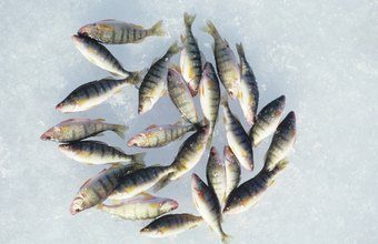 Frozen fish typically retain their quality longer than fresh seafood.