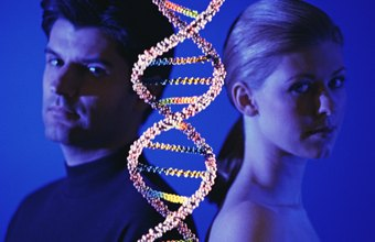 Genetic scientists analyze DNA to determine hereditary characteristics.