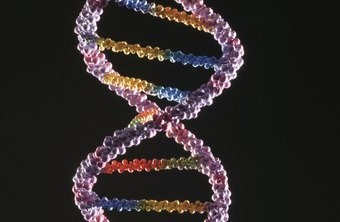 Clinical geneticists treat and counsel those with genetic disorders.