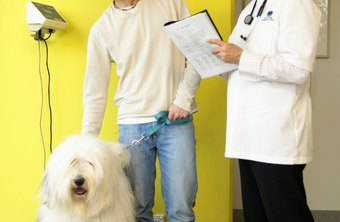 Veterinarians keep owners informed of best practices in caring for animals.