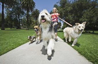 A pet sitter may juggle multiple animals at a time.