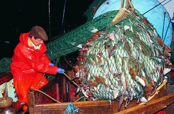Deep sea fishermen may help fix equipment and process fish while at sea.