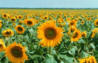 If you own a large piece of land, growing flowers on it might prove profitable.