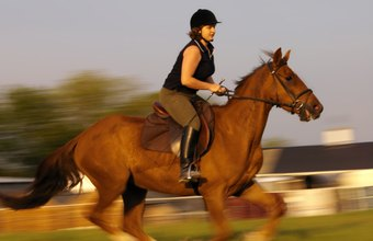 Horses experience the same types of musculoskeletal problems as do humans.