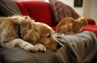 Pets have become valuable members of households in the United States.