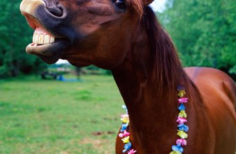 Mature horses require annual dental checkups, and young horses require more.