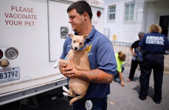 Animal control workers protect the public and animals.