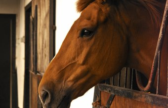 Offer extra services to attract new clients to your stables.