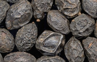 You can sell saw palmetto berries either raw or dried.