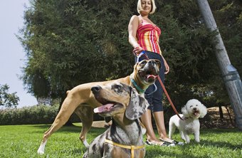 Start a dog walking business for under $2,000.