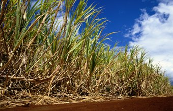 Access to sugar cane crops is a strength for some biodegradable packaging companies.