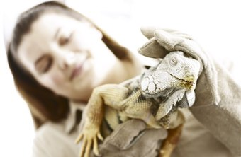 Zoo veterinarians care for wild and exotic animals.