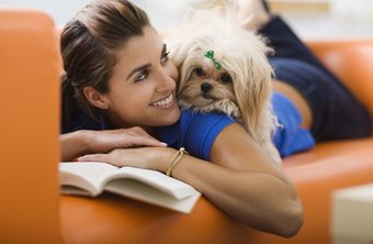 Fostered pets enjoy human interaction and a home setting.